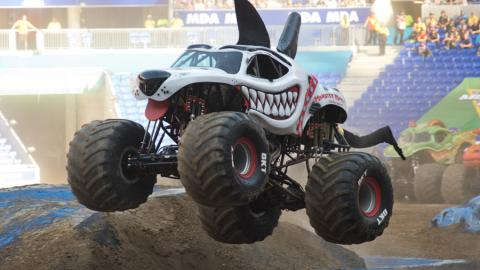 Monster Mutt Dalmatian - Photo by Michael Gottschalk