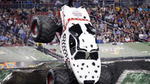 Monster Mutt Dalmatian. Photo by Dave DeAngelis