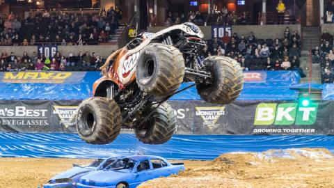 Monster Mutt. Photo by Rod Jeffers.