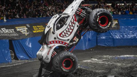 Monster Mutt Dalmatian - Photo by Tom Morris
