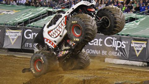 Monster Mutt Dalmatian - Photo by Dustin Parks