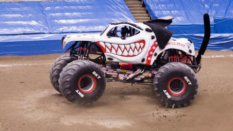 Monster Mutt Dalmatian - Photo by Vic Turczynski