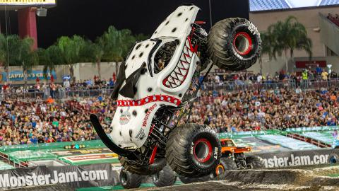 Monster Mutt Dalmatian - Photo by Eric Stern