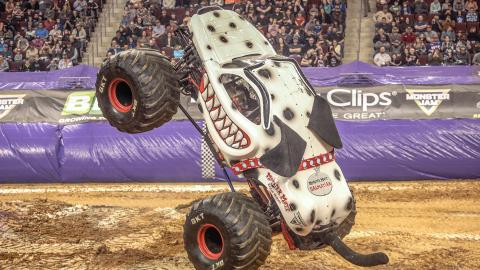 Monster Mutt Dalmatian (Photo by Jen Bay)