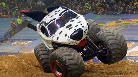 Monster Mutt Dalmatian